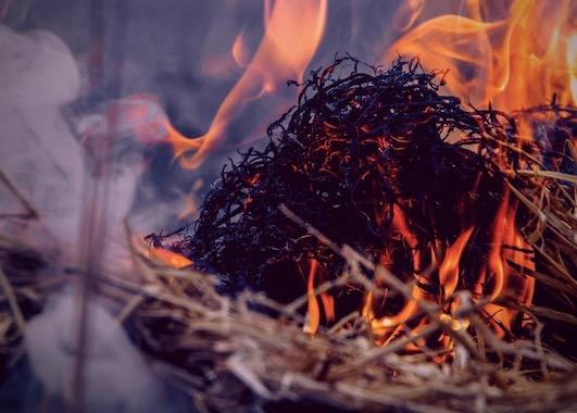 Bild Burn Fat Burn